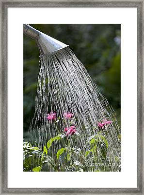 Watering Can Framed Print by Picture Partners and Photo Researchers