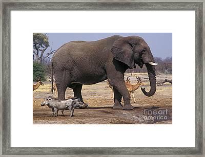 Framed Print featuring the photograph Watering Hole - Savuti Marsh Botswana by Craig Lovell