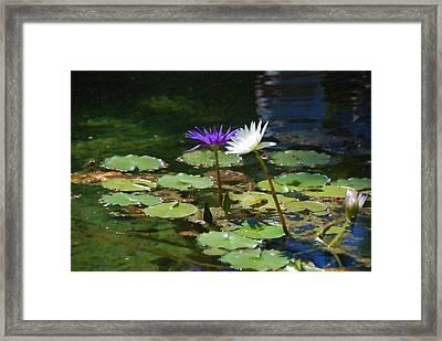 Waterlilies 1 Framed Print