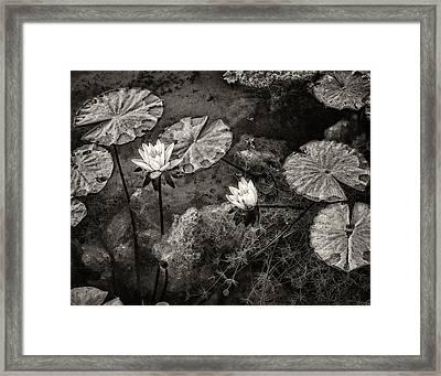Waterlilies In Sepia Framed Print