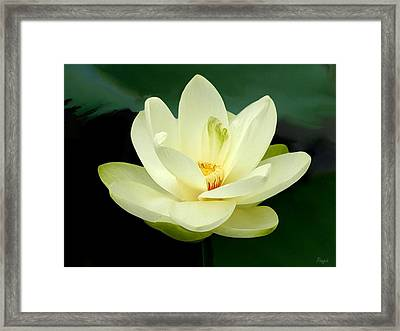 Framed Print featuring the digital art Waterlily by John Pangia