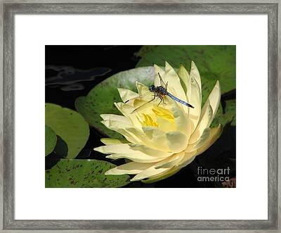Waterlily With Dragonfly Framed Print by Eva Kaufman