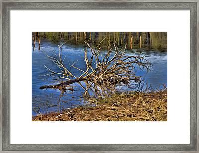 Waterlogged Tree Framed Print by Douglas Barnard