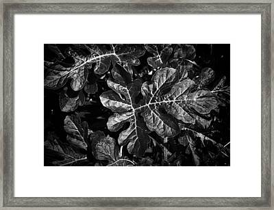 Watermelon Leaves Framed Print by Tom Bell