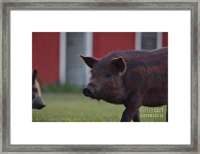 Watermelon Framed Print