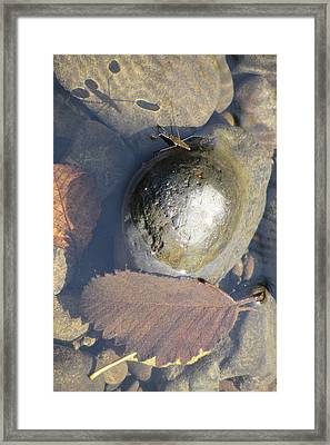 Waterstrider At Rest Framed Print