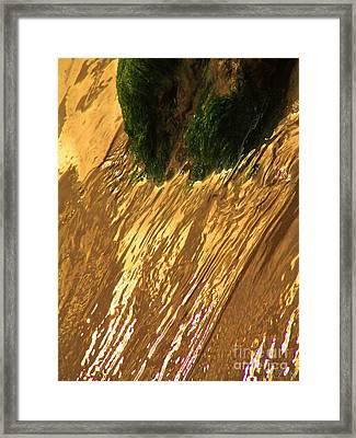 Watty5 Framed Print