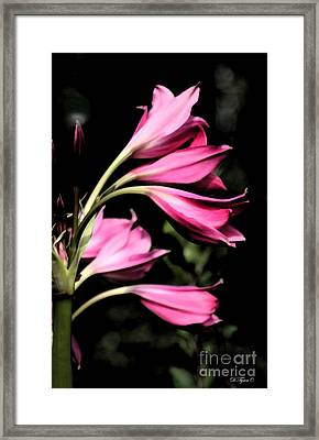 Wave Of Pink Framed Print by Diana  Tyson