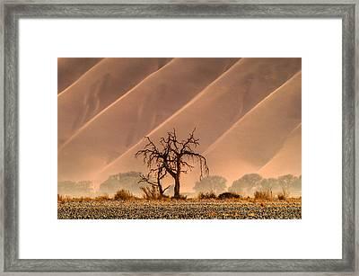 Wave Tree Framed Print by Alistair Lyne