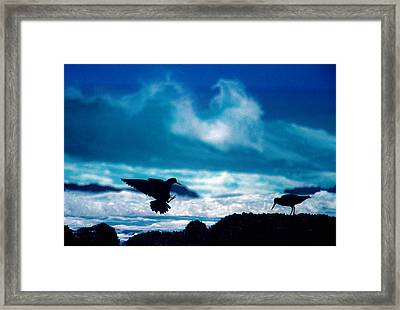 Wavedance Framed Print