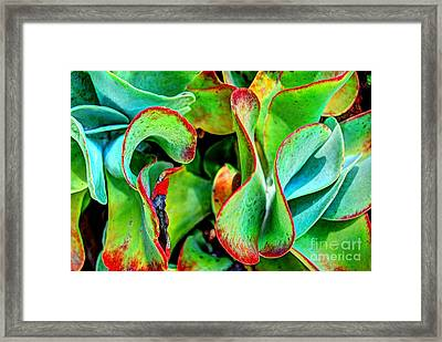 Waves Vegetable 3 Framed Print by Elena Mussi