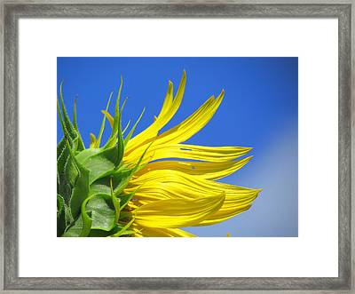 Waving Goodbye To Summer Framed Print