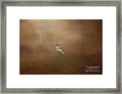 Waxwing Spring Visit Framed Print by Cris Hayes