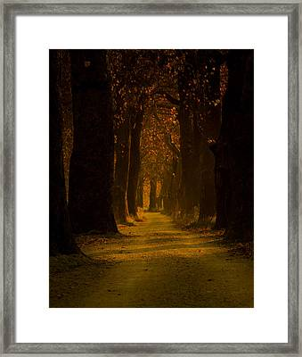 Way In The Forest Framed Print by Zafer GUDER