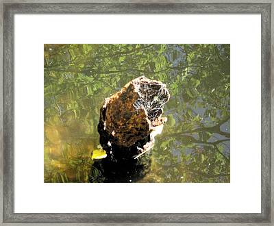 We All Float Down Here Framed Print by Bruce Carpenter