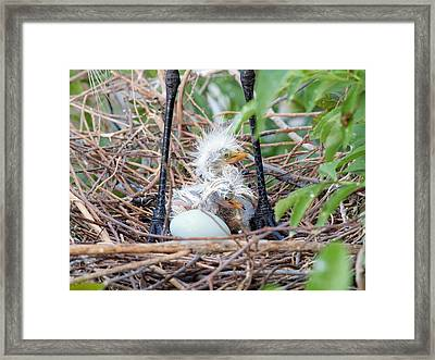 We Have Been Born Framed Print by Phil Stone