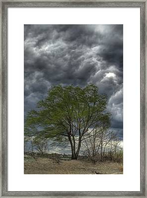Weathering The Storm Framed Print by At Lands End Photography