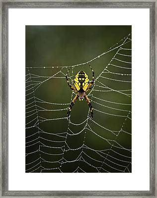 Weave Master Framed Print by Susan Capuano