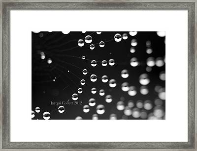 Web Framed Print by Jacqui Collett