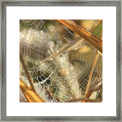 Framed Print featuring the photograph Web Of Jewels by Penny Meyers