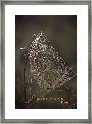 Web Of Life Framed Print by Rick Rauzi