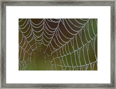 Framed Print featuring the photograph Web With Dew by Daniel Reed