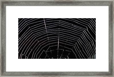 Web Wonder 2 Framed Print by Elizabeth Sullivan