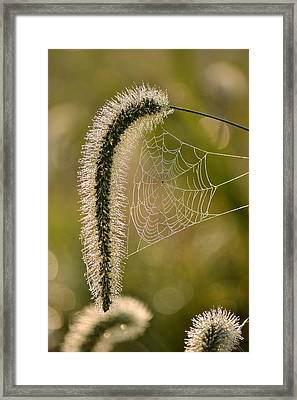 Webbed Tail Framed Print