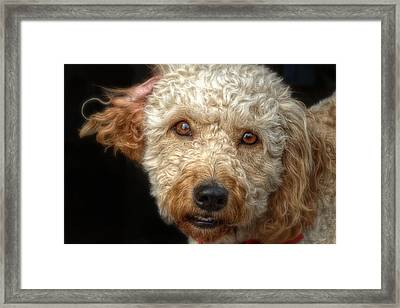 Webster At The Bar Framed Print