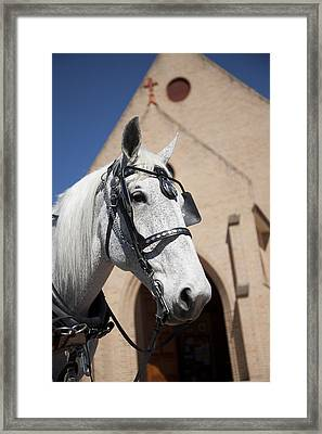 Framed Print featuring the photograph Wedding Horse  by Carole Hinding