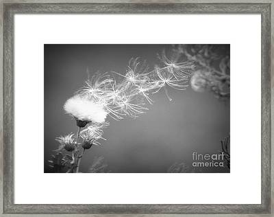 Framed Print featuring the photograph Weed In The Wind by Deniece Platt