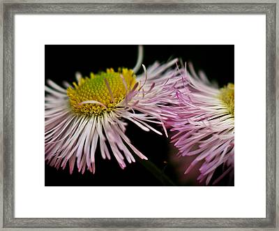 Weeds Framed Print by Susie DeZarn