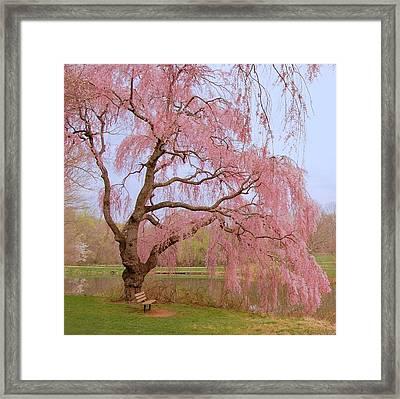 Weeping Spring- Holmdel Park Framed Print by Angie Tirado