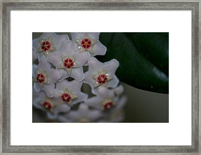Weeping Star Framed Print