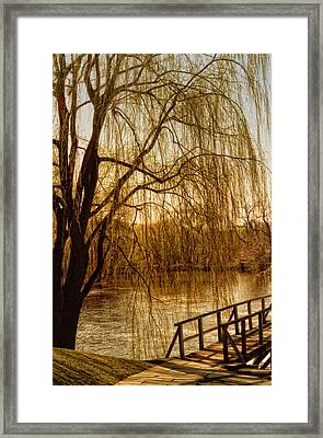 Weeping Willow And Bridge Framed Print by Barbara Middleton