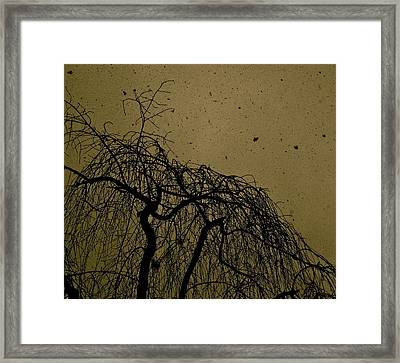 Weeping Willow In Winter Framed Print by Thomas Brown