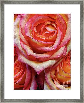 Weepy Woses Framed Print by Mark Holbrook