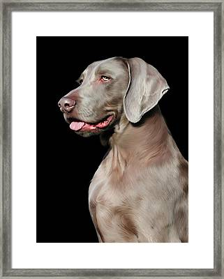 Weimaraner  Framed Print by Julie L Hoddinott