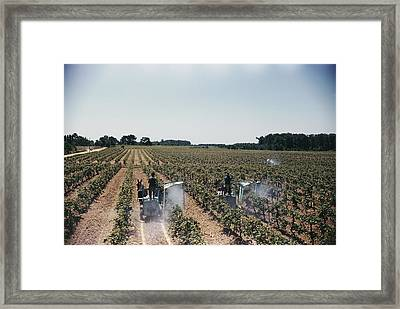 Welchs Grape Vineyard Covers 250 Acres Framed Print by Willard Culver