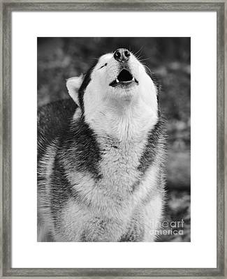 Welcome Hoooommme Framed Print