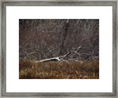 Welcome To Winter Framed Print