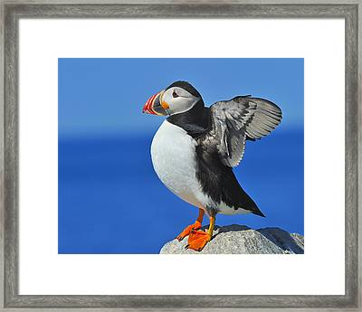 Welcoming The Sunrise Framed Print by Tony Beck