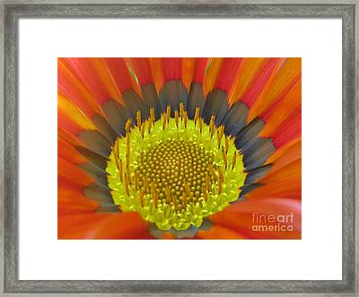 Well-disposed Framed Print by Tina Marie