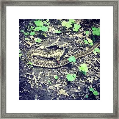 Well Hello Mista Snake #snake #woods Framed Print