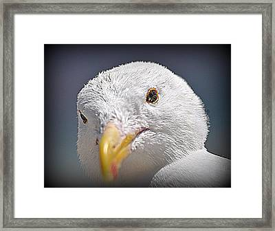 Well Hello There Framed Print by Nicky Dou