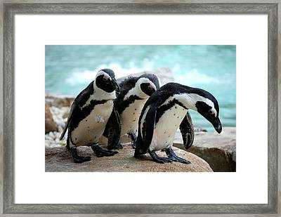 We're Sorry Framed Print by Kathy Gibbons