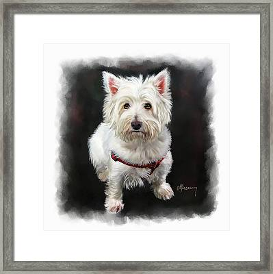 West Highland White Terrier Framed Print by Michael Greenaway