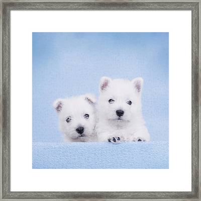 West Highland White Terrier Puppies Framed Print by Waldek Dabrowski