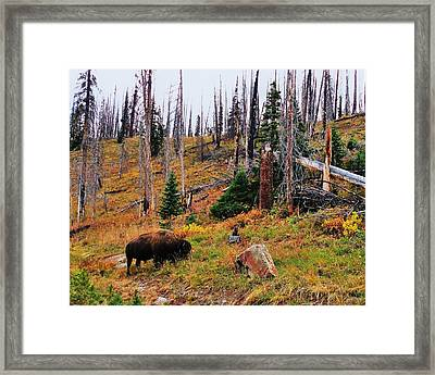 Western Icon Framed Print by Benjamin Yeager