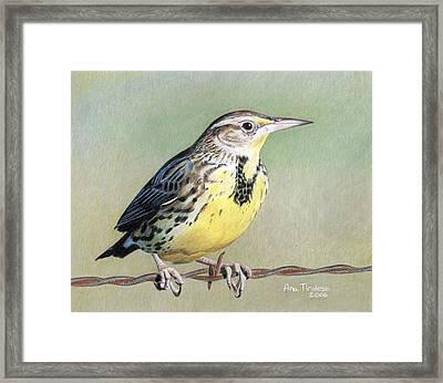 Framed Print featuring the drawing Western Meadowlark by Ana Tirolese